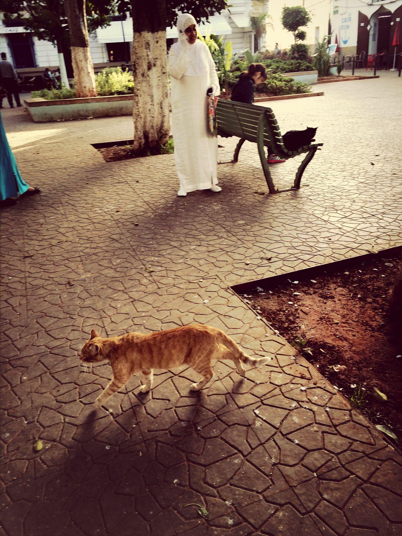 Beautiful Surroundings Cats Walking Around