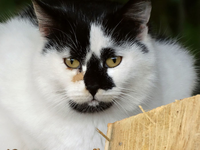 Tricolor cat Animal Themes Cat Looking At The Camera Cat Looking At You Cat Portrait Close-up Domestic Animals Domestic Cat Feline Friendship Look At Me Look At My Eyes Mammal Melancholy Cat Pets Portrait Tricolour Cat Tricoloured Whisker Yellow Eyes