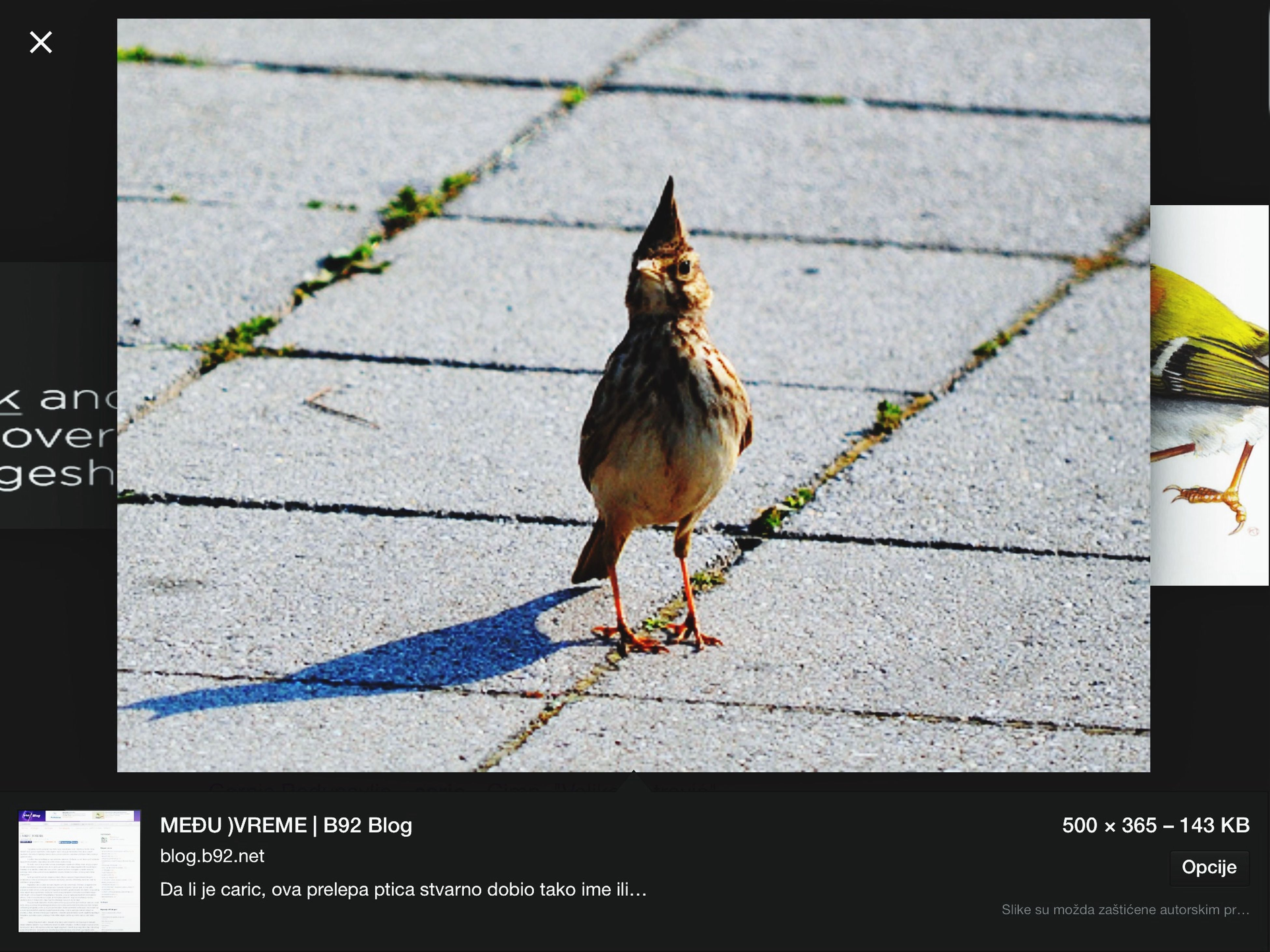 animal themes, one animal, animals in the wild, wildlife, bird, transfer print, auto post production filter, full length, perching, shadow, outdoors, high angle view, day, sidewalk, sunlight, wall - building feature, leaf, pets, pigeon, side view