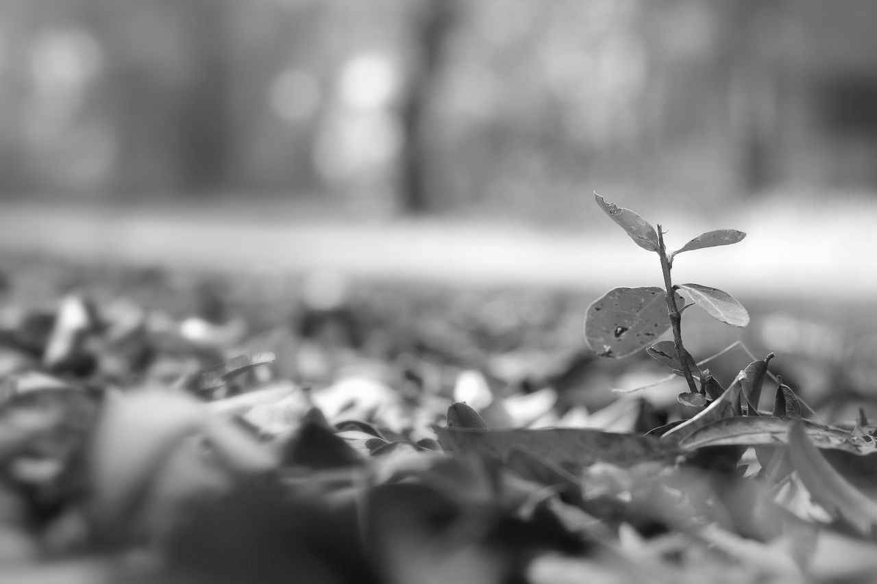 selective focus, nature, day, outdoors, close-up, beauty in nature, no people, leaf, water