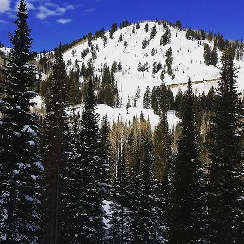 Can't get over this...why the hell did I move away?? Mountainlife Addictedtosnow Fuckcali Iwantsnow Mypeace  Myhappyplace
