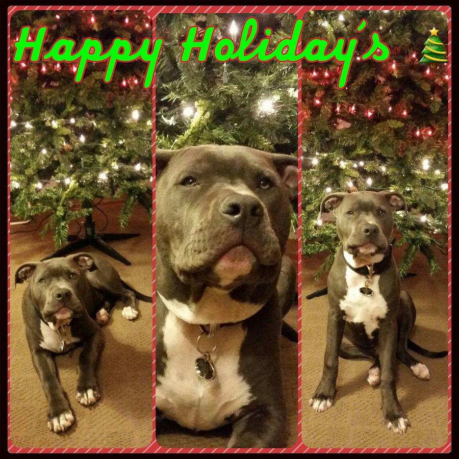 Happy Holiday's! Taking Photos Pets Christmas Happy Holidays!