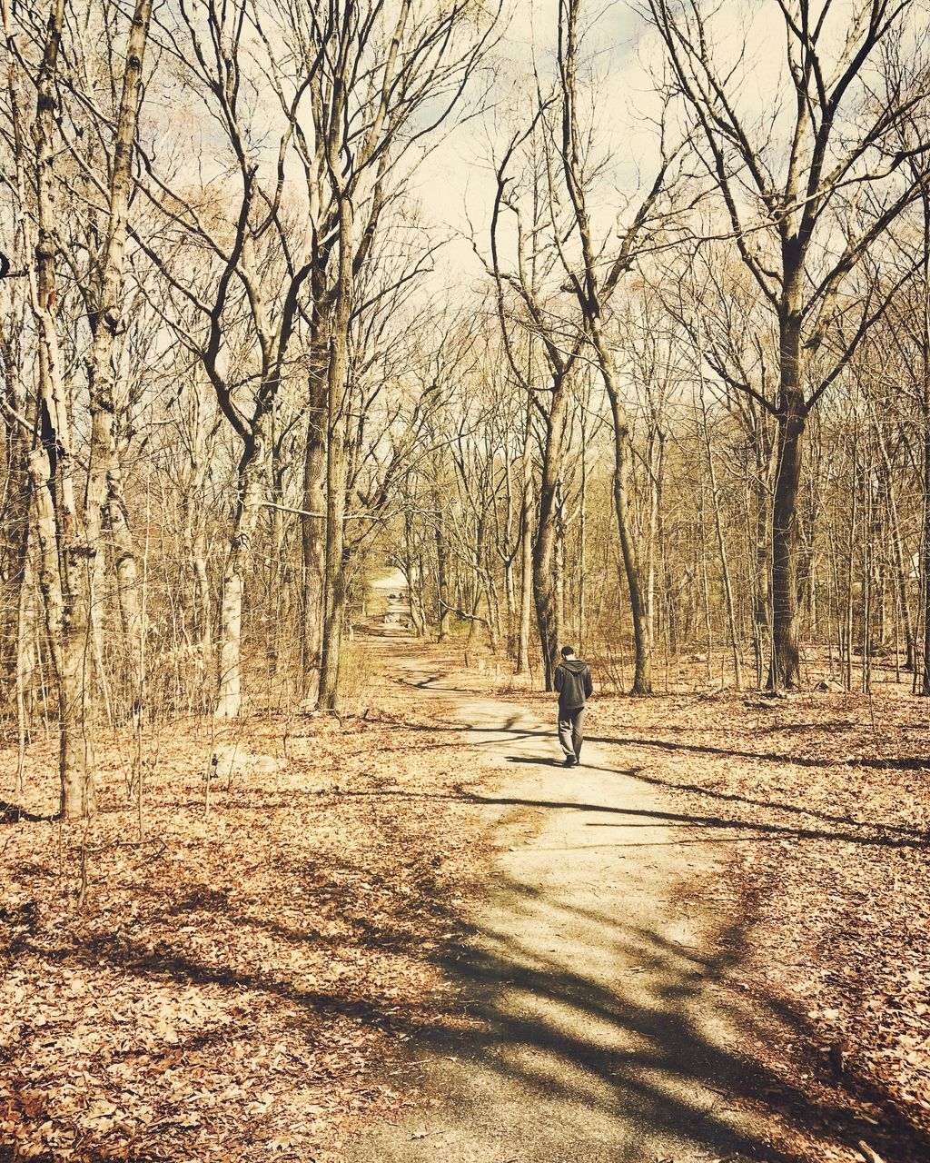 one person, bare tree, autumn, full length, one animal, tree, real people, dog, lifestyles, nature, pets, day, outdoors, men, domestic animals, mammal, one man only, people, adult