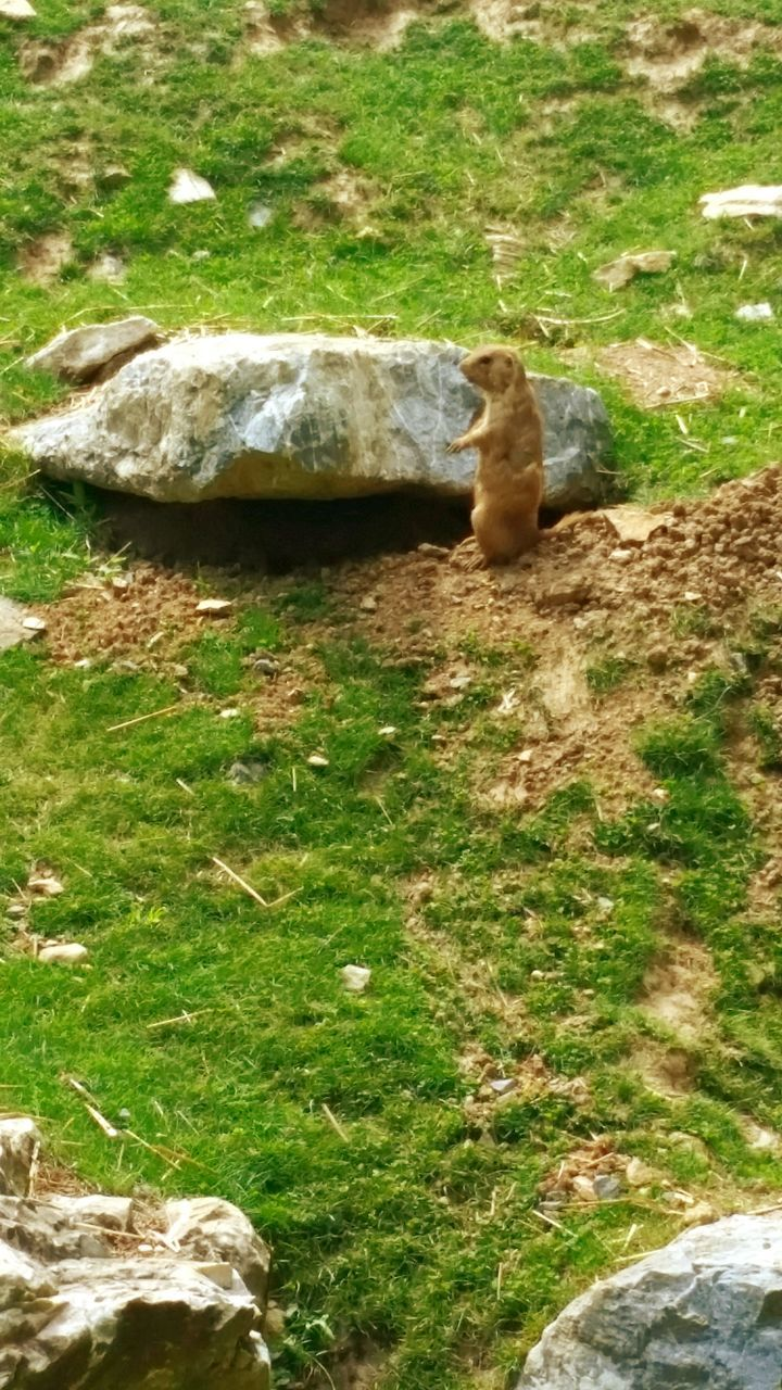 animal themes, one animal, grass, day, high angle view, animals in the wild, mammal, no people, outdoors, nature, sitting