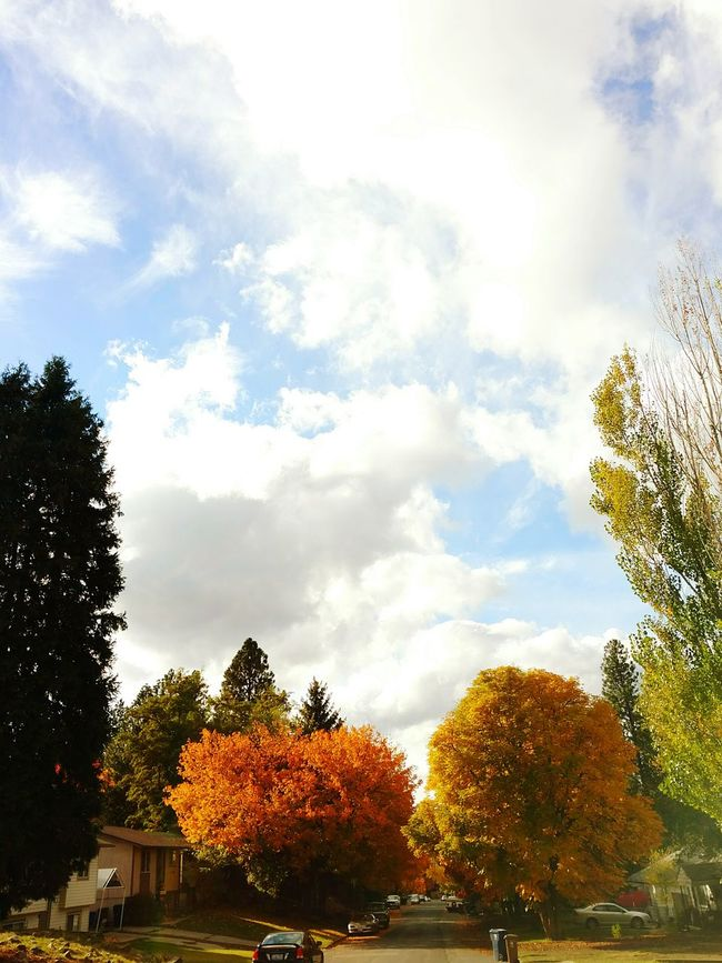 Fall Tree Cloud - Sky Social Issues Sky Horizontal Outdoors Nature Water No People Day