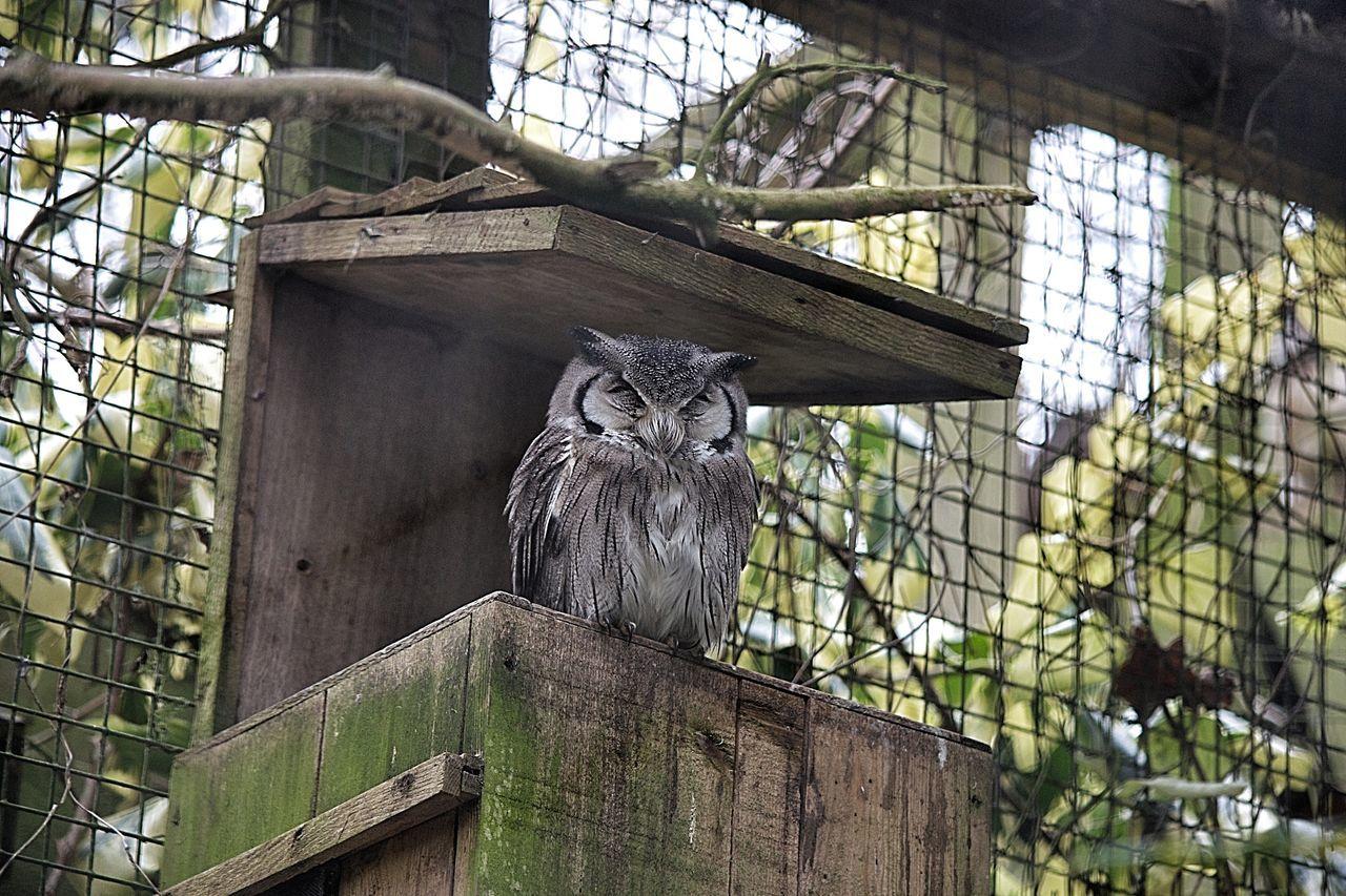 Beautiful stock photos of eule, Animal Themes, Animal Wildlife, Animals In Captivity, Beauty In Nature