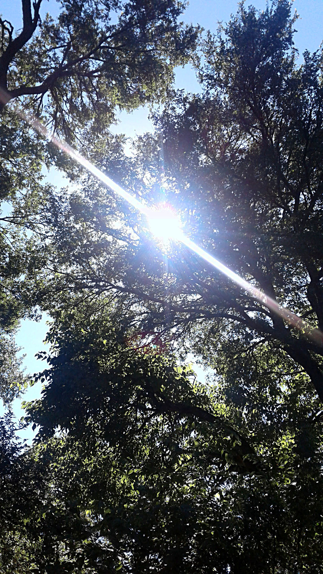 In the woods, bright light making star rays through the branches in the clear blue sky. Beauty In Nature Branch Day Forest Growth Lens Flare Light Low Angle View Nature No People Outdoors Ray Of Light Scenics Sky Sun Sunbeam Sunlight Sunlight Tranquility Tree