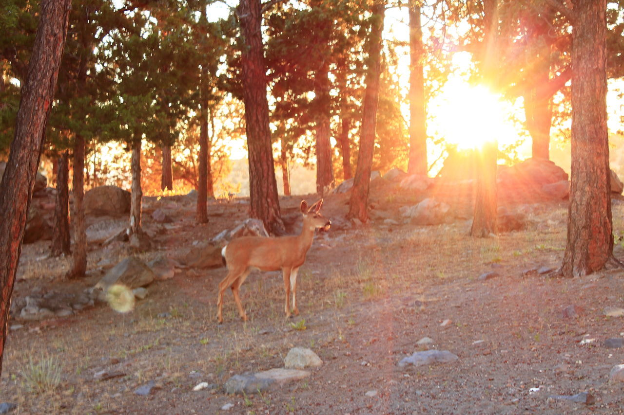 Forest Mountains Deer Diamond Mafia Photography A.M.Marasco Diamond Mafia Studios