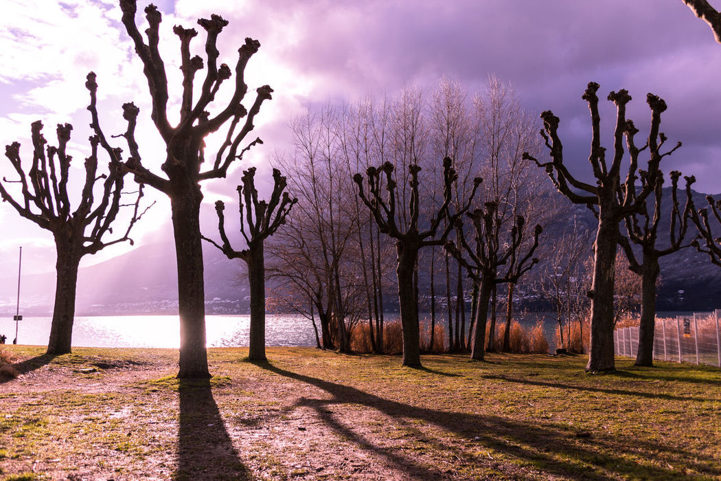 Lake View Nature Landscape Sun And Clouds Shadows & Lights Trees