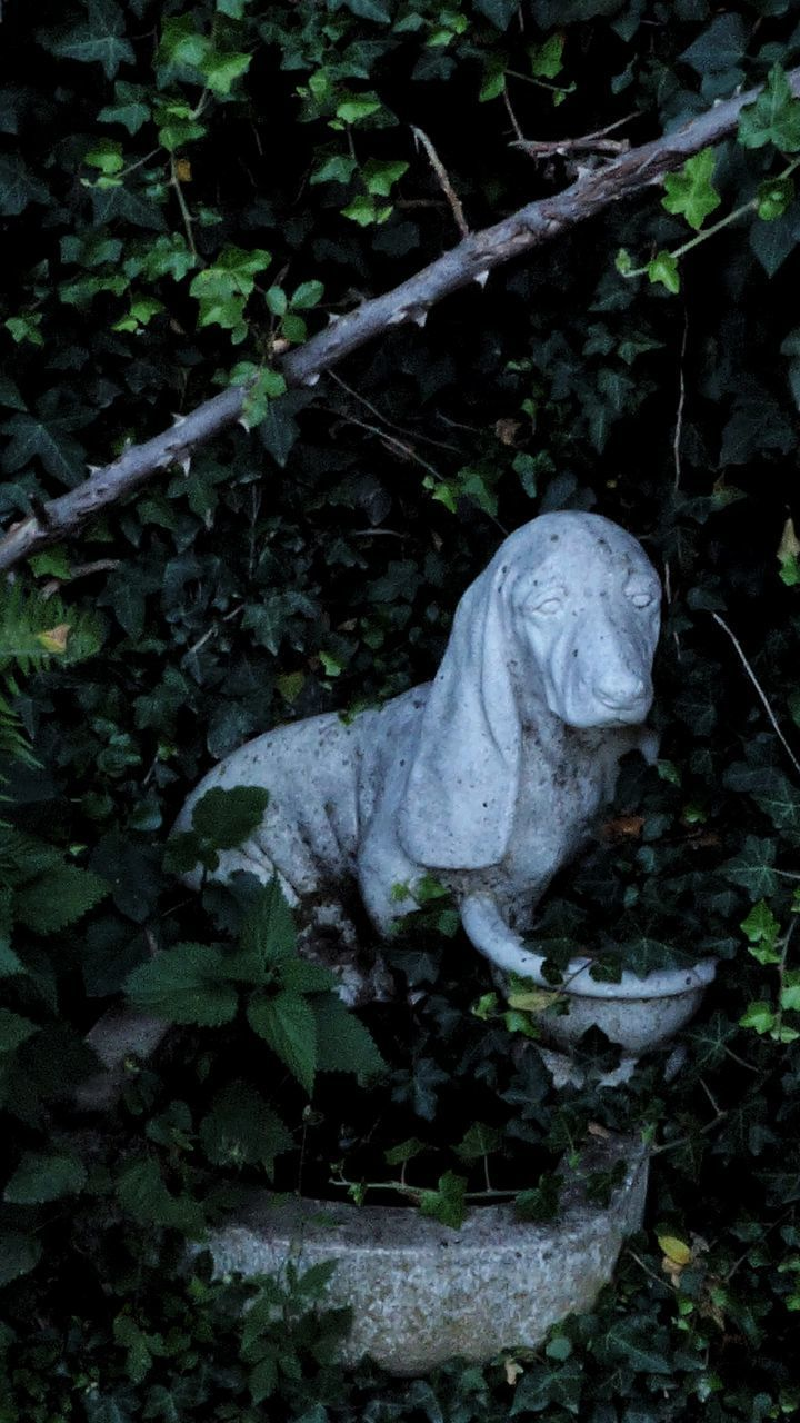 plant, outdoors, no people, leaf, day, nature, growth, statue, sculpture, animal themes, close-up, mammal