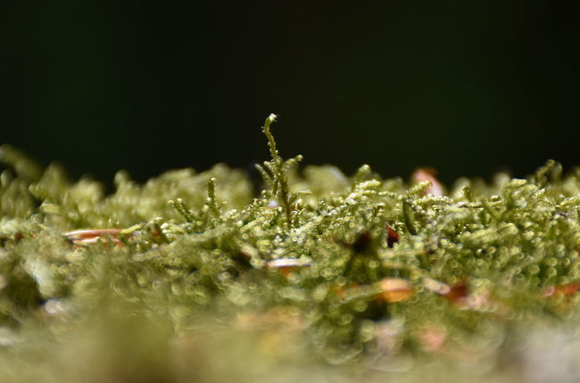 Beauty In Nature Close-up Day Detail Focus On Foreground Fragility Green Green Color Growing Growth Moos Nature No People Outdoors Plant Selective Focus Tranquility Weather