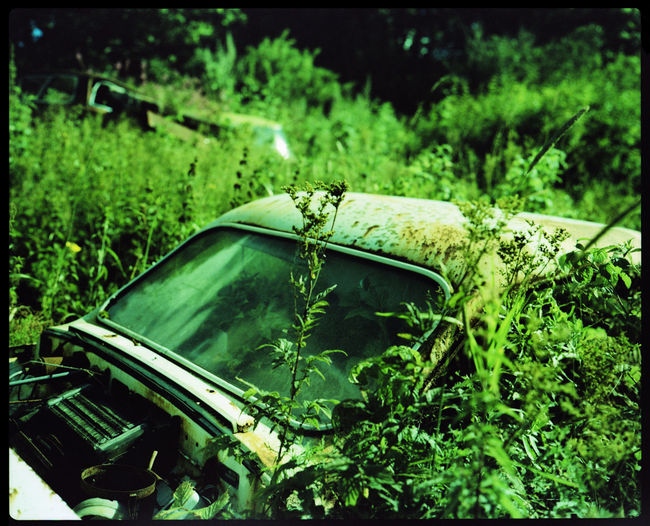 At the Magical Car Cemetery of Båstnäs Abandoned Analogue Photography Bushes Båstnäs Car Cemetery Cars Forrest History Industry Machines Magic Nature Nature Taking Over Outdoors Past Plants Plaubel Makina 67 Rust Scrap Scrap Metal Summer Sweden Trip Xpro