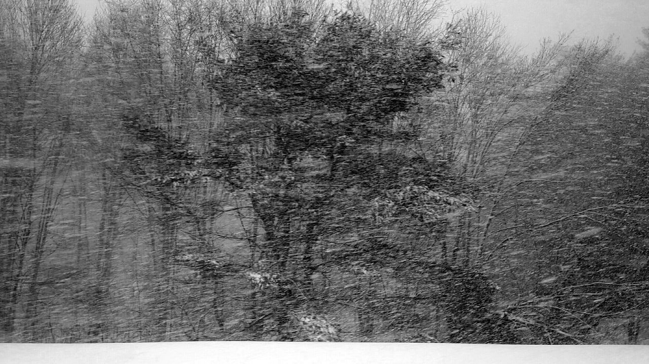Snowstorm 2017 Backgrounds Textured  Full Frame No People Abstract Snowing Outdoors Winter Conditions Weather Tree White Out Blizzard Snow Black And White EyeEm Best Shots - Black + White ❄
