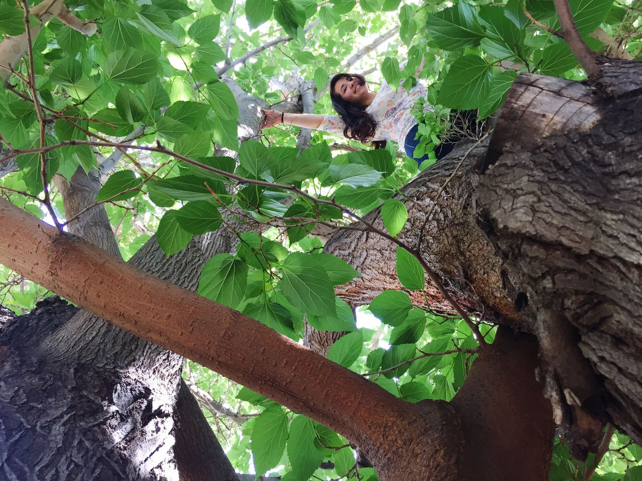 Climbing Trees Just Hanging Around Get On My Level That's Me Check This Out Hi! Cheese! Taking Photos Adventure Is Out There That Is All