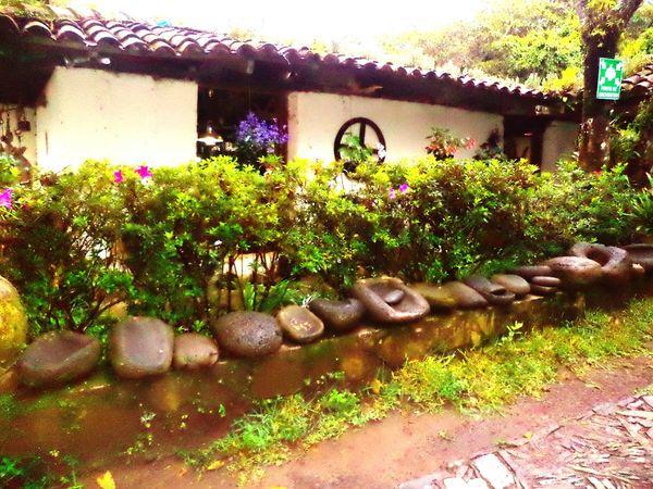 Flores De Eloisa Ahuachapan  El Salvador