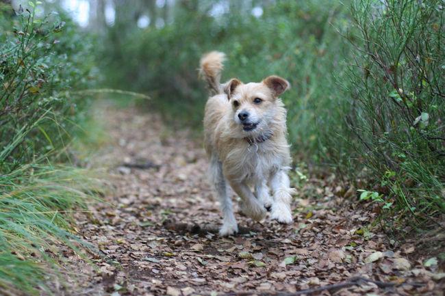 Dog Dog Portrait Dogs Draußen Hund Hund In Aktion Hunde Hunde In Aktion Hundeportrait Im Moor Laufender Hund Outdoors Portrait Running Dog Spaziergang Im Moor Happy Dog Surface Level Glücklich Nature