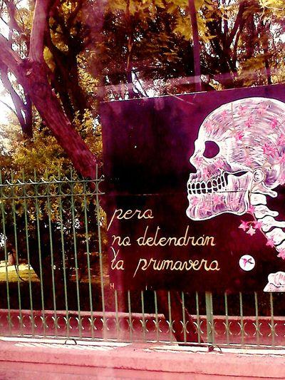 Querétaro Dia De Muertos México