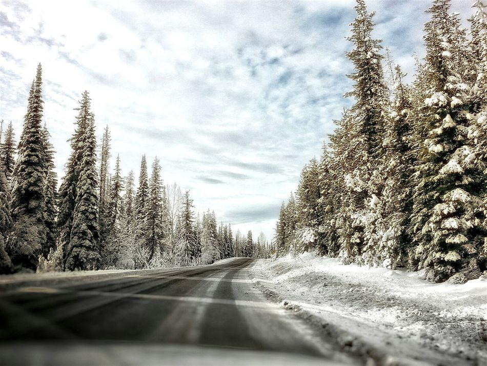 Winter driving in BC. Windshield Transportation The Way Forward Tree Car Interior Sky Vehicle Interior Cloud - Sky Car No People Land Vehicle Road Nature Outdoors Close-up Warm Light Sunlit Glow Snowy Road Mountain Road Winter Driving Winter Driving Conditions Winter Roads Snowy Roads Snow Covered Snow Covered Trees