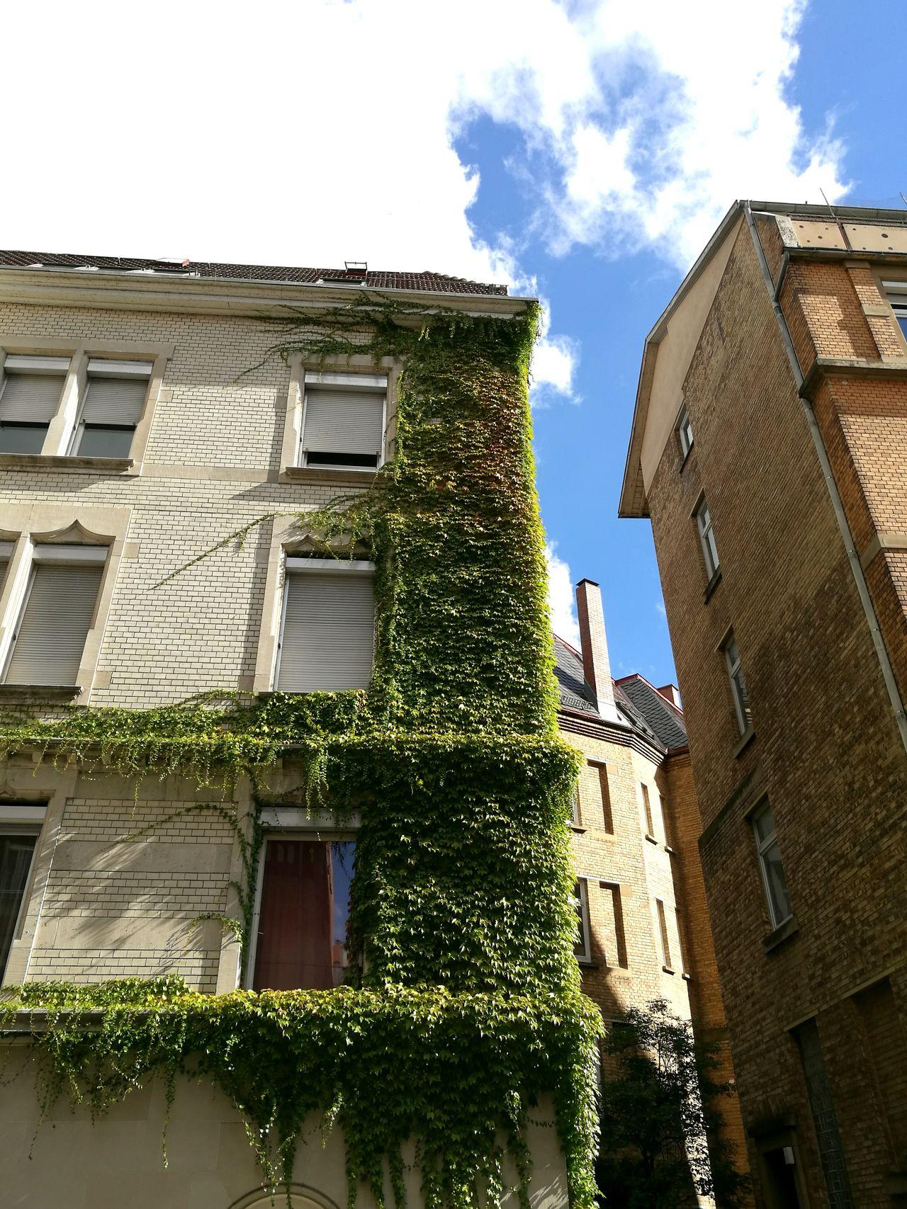 A View into the backyard. Artnouveau Architecture Art Nouveau Architecture Art Nouveau Buildings Art Nouveau Style Architecture_collection Backyard Backyardphotography Backyard Photography