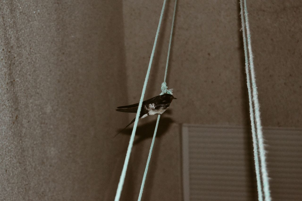 Side view of bird on string against the wall
