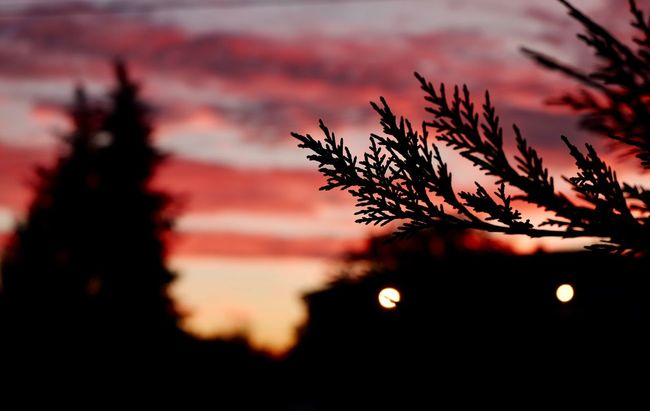 Rosy Morning Eye4photography  EyeEm Best Shots Freshness Rosy Beauty In Nature Silhouette Sunset Scenics Beauty In Nature Growth Tranquil Scene Tranquility Close-up Nature Majestic Focus On Foreground Plant Idyllic Outline Awe Water Dark Dramatic Sky Branch Romantic Sky