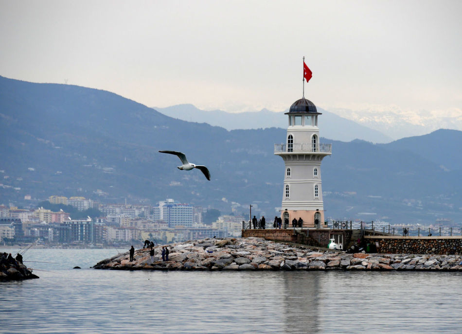 Beautiful stock photos of lighthouse, Alanya, Animal Themes, Animal Wildlife, Animals In The Wild