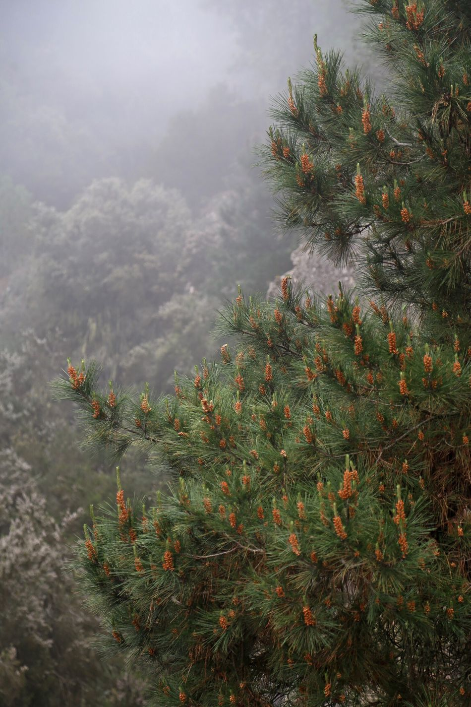 Tenerife Nature Forest Foggy Fog Sunlight Light Canary Islands Nature_collection Colors Traveling Beautiful Canonphotography Travel Trees Tree