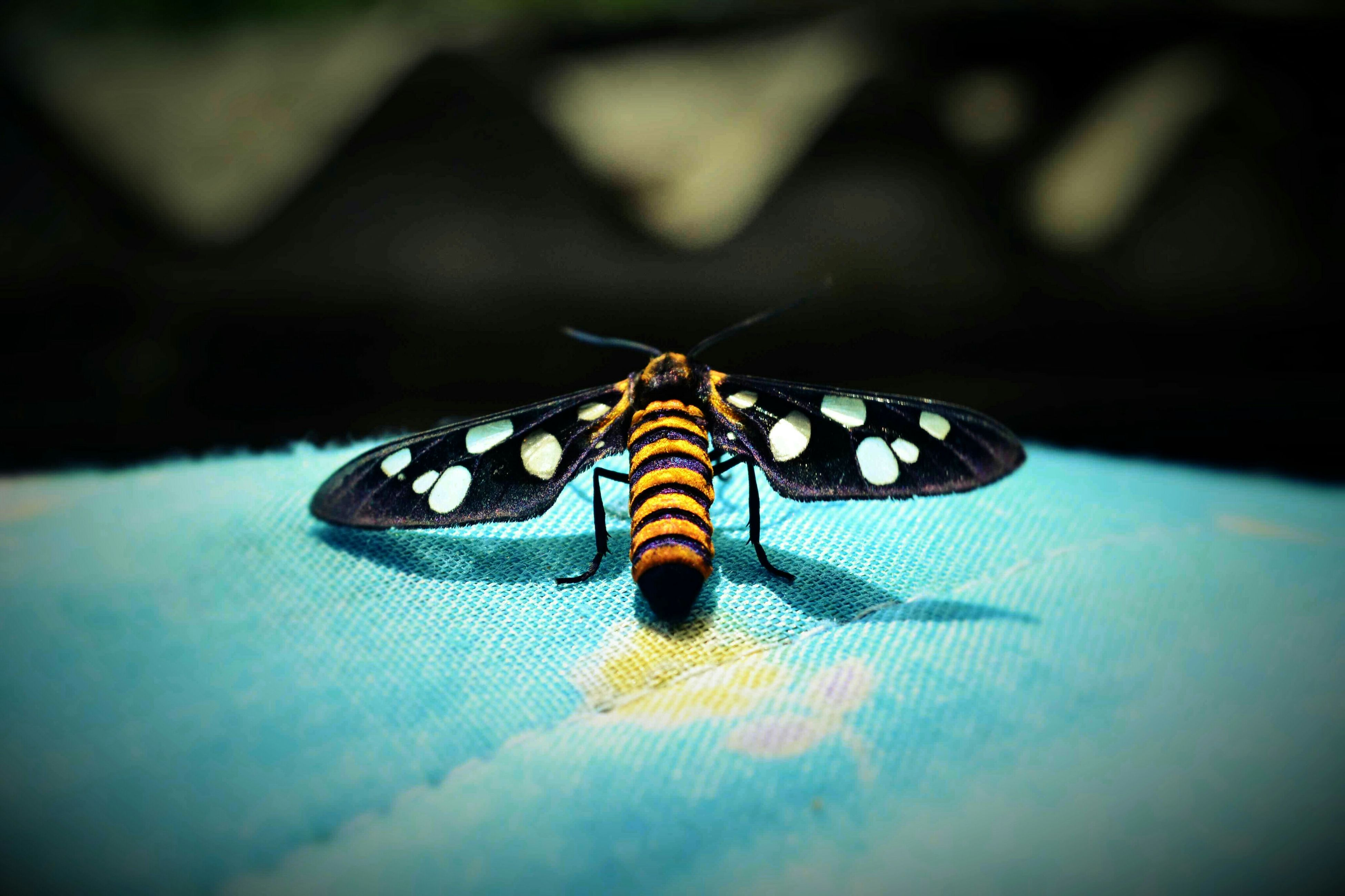 close-up, focus on foreground, insect, selective focus, indoors, butterfly - insect, pattern, design, animal representation, butterfly, one animal, animal themes, art and craft, no people, animal markings, creativity, animals in the wild, single object, still life, art