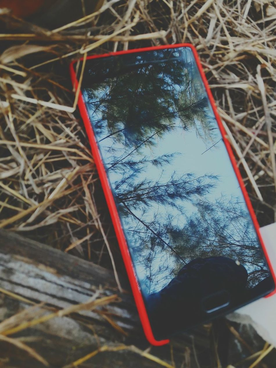 Wheyougetbored Close-up No People Outdoors Being Alone Oneplus2 Nothing To Do But This. Nature Lover