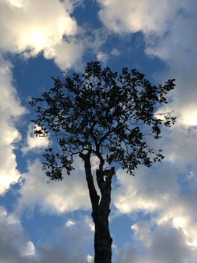 Tree Sky Sky And Clouds Treescollection Sky And Trees Blue Sky Camping Camp Campdays Campo