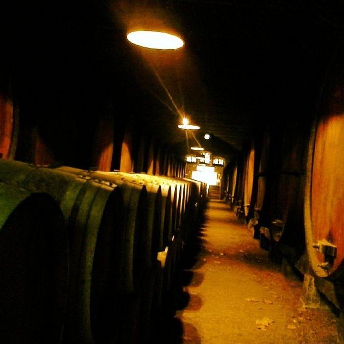 adega mata, onde fica em estágio aquele que é o vinho engarrafado mais antigo de portugal, o periquita de josé maria da fonseca Jmf Azeitao Vinho Portugal Periquita Portuguese wine