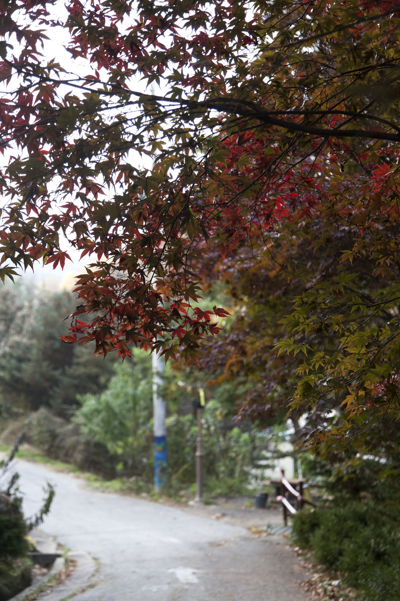 autumn in Maisan Mountain, Muan, Jeonbuk, South Korea Autumn Autumn Autumn Colors Beauty In Nature Branch Day Fall Forest Growth Lane Leaf Maisan Nature No People Outdoors Scenics The Way Forward Tranquil Scene Tranquility Tree Walkway