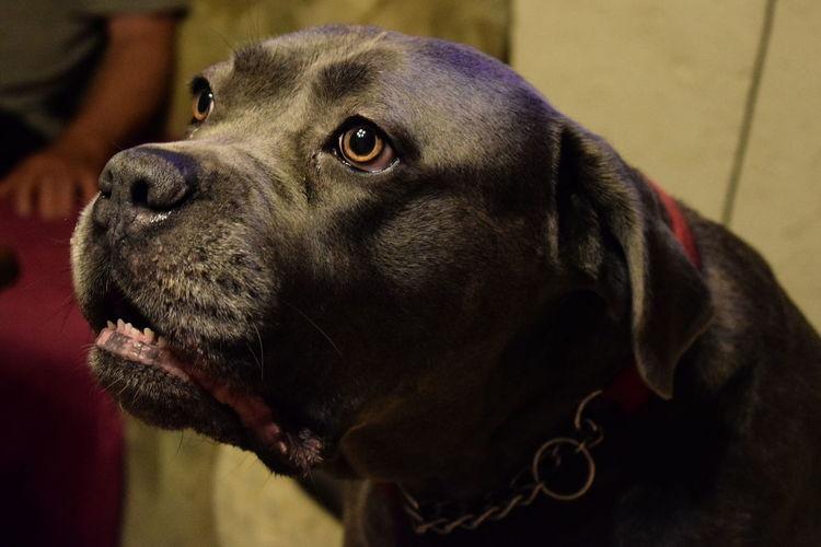 Hund First Eyeem Photo