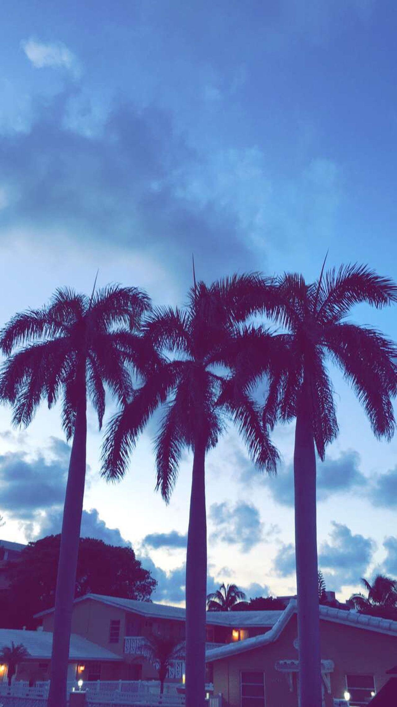 I miss these three palm trees. Hello World Taking Photos Palm Trees