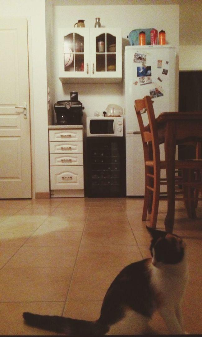 Cats Cat Pets Animals