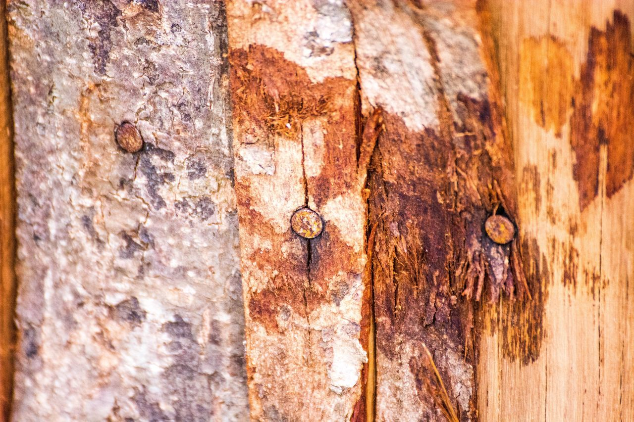 Wood Planking Tree Bark Rusty Rusty Nails In My Garden