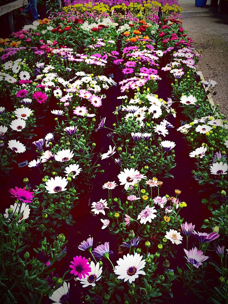 Flowers Colorful Great Smell Welcome Spring!
