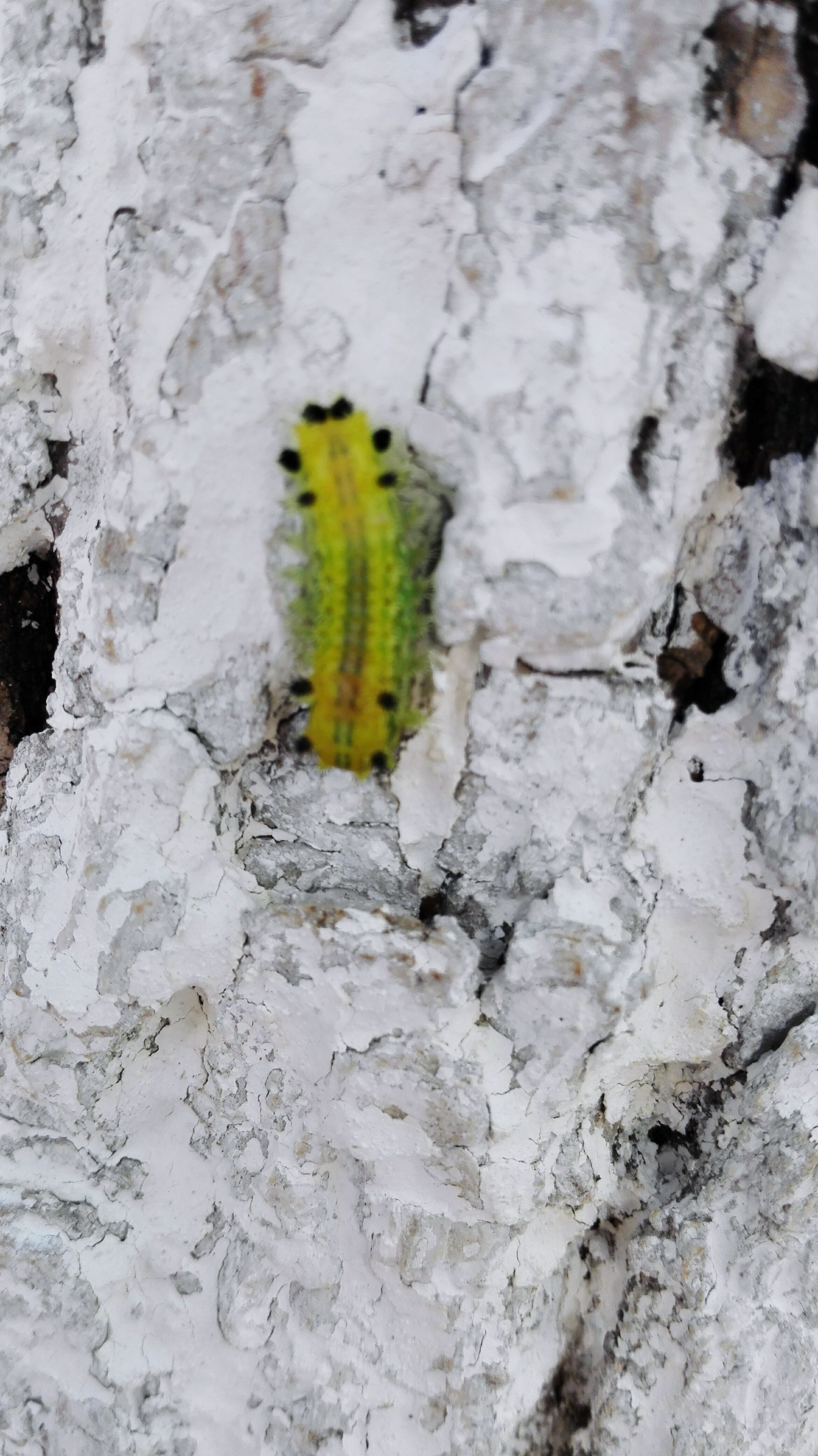 green color, textured, wall - building feature, growth, close-up, nature, rough, plant, tree trunk, day, rock - object, outdoors, no people, green, yellow, moss, animals in the wild, growing, beauty in nature, insect