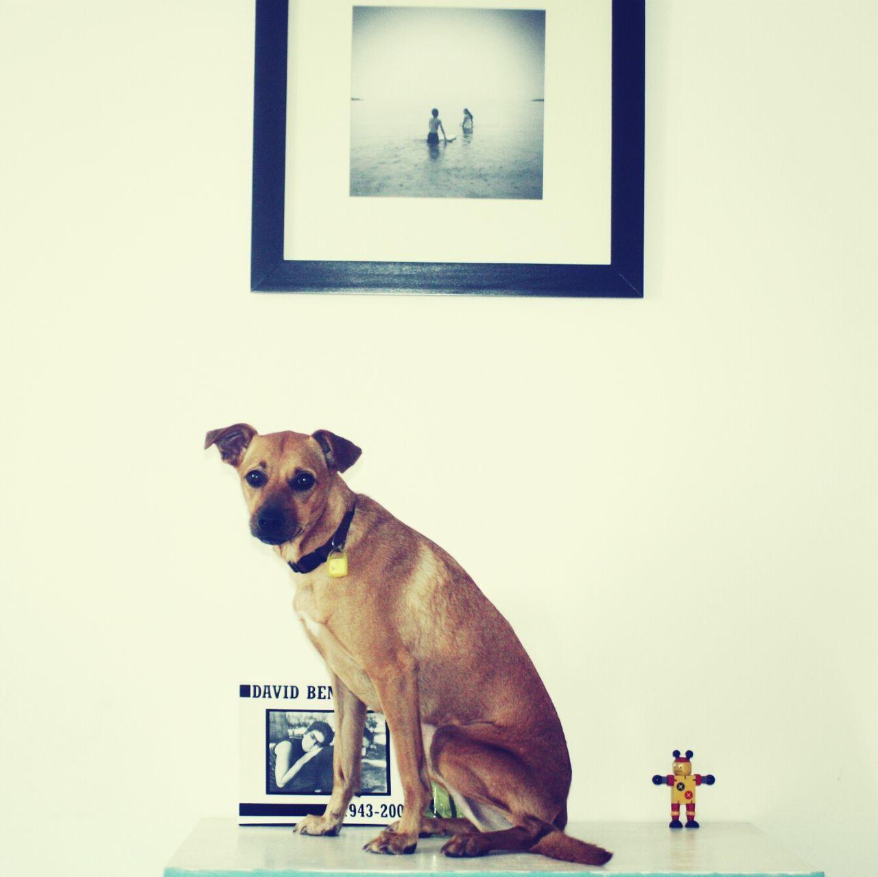 Beautiful stock photos of frame, Animal Head, Animal Themes, Dog, Domestic Animals