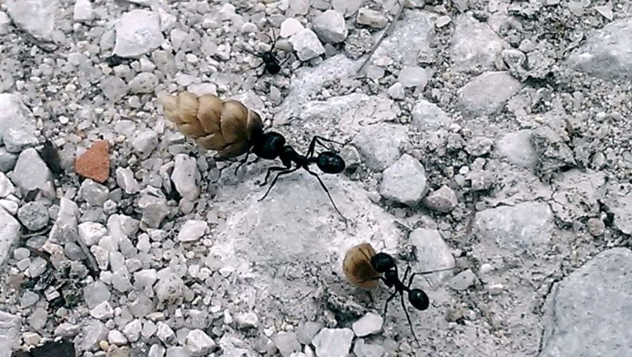 insect, animals in the wild, animal themes, one animal, animal wildlife, day, outdoors, nature, high angle view, no people, pebble, fragility, close-up