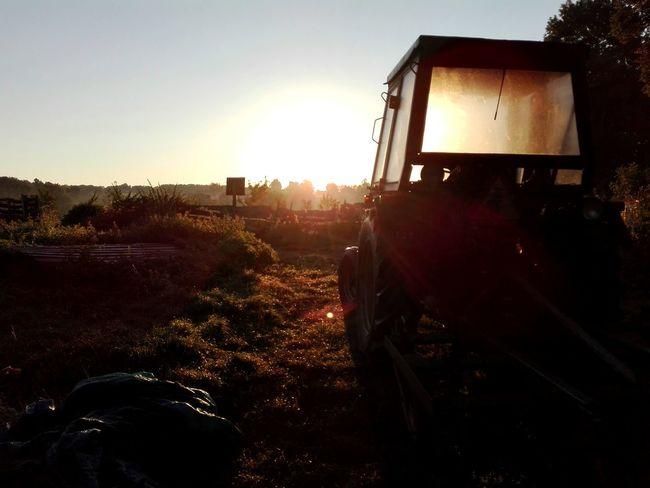 First Eyeem Photo Grass Sun Sunupper Traktor trees