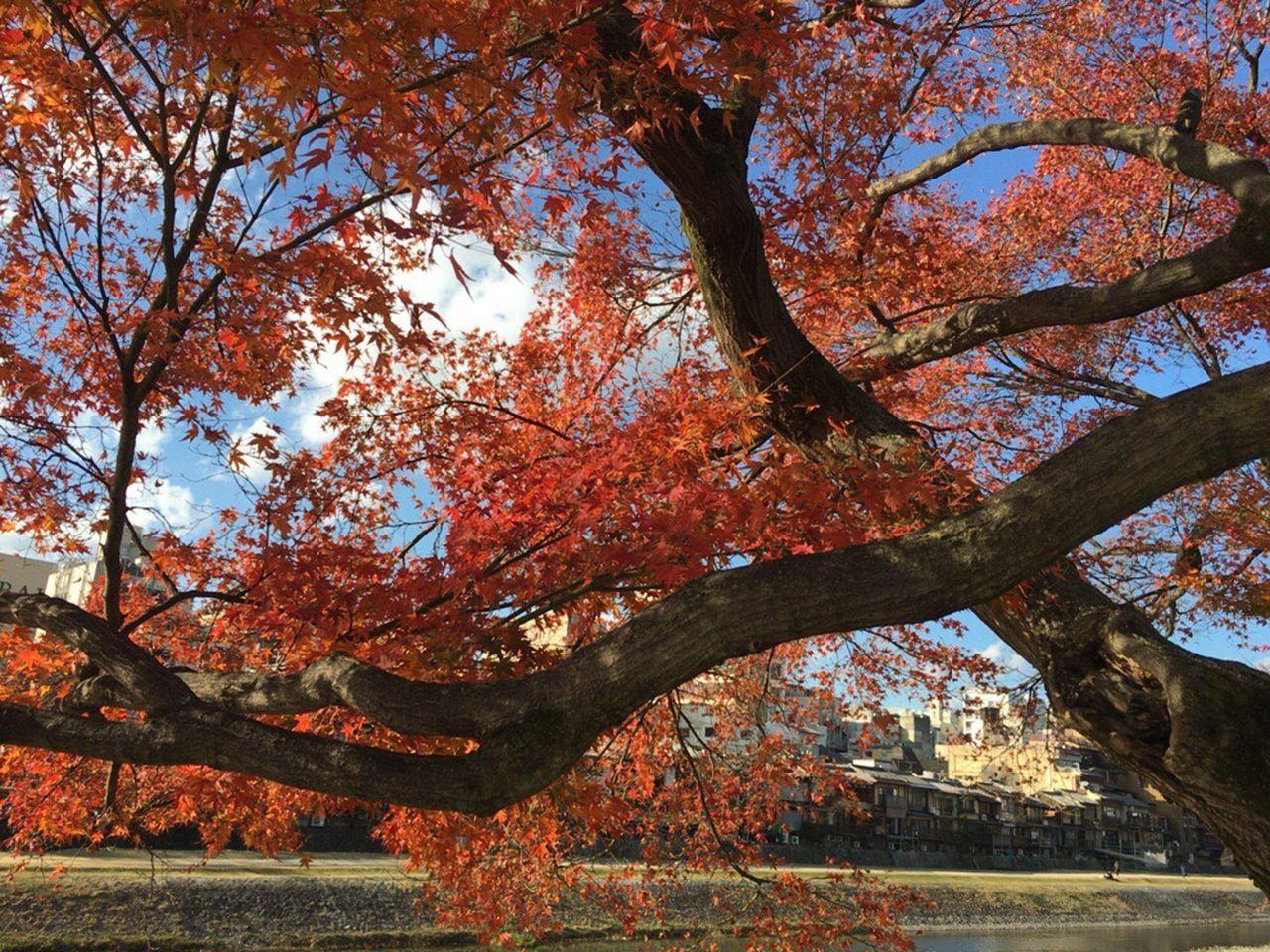 Kyoto Autumn Leafs Kyoto Japan Kyoto Autumn Kyoto City