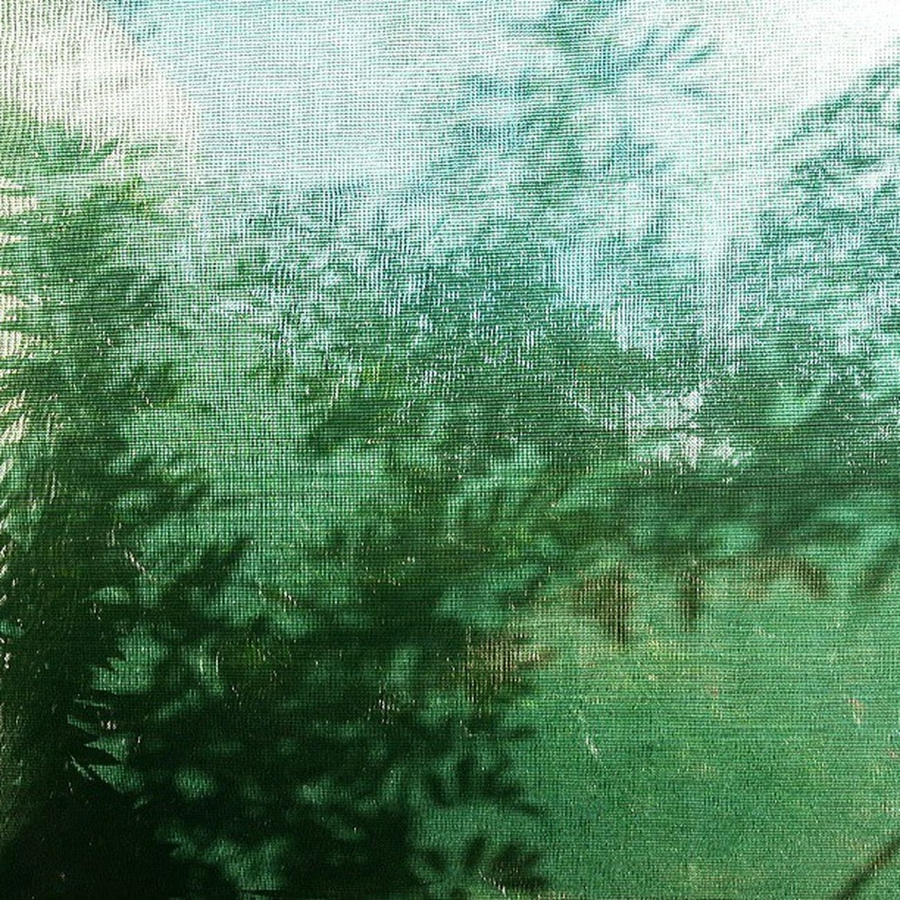 Insta_global Iglady Igminimal Ig_captures insrael ig_israel instamood il_instagram ig_exquisite ig_minimalshots jj_minimalism jj_forum jj_simplethings artphoto texture colorcharted_green color_fab instacolor insta_israel icatching shaddow
