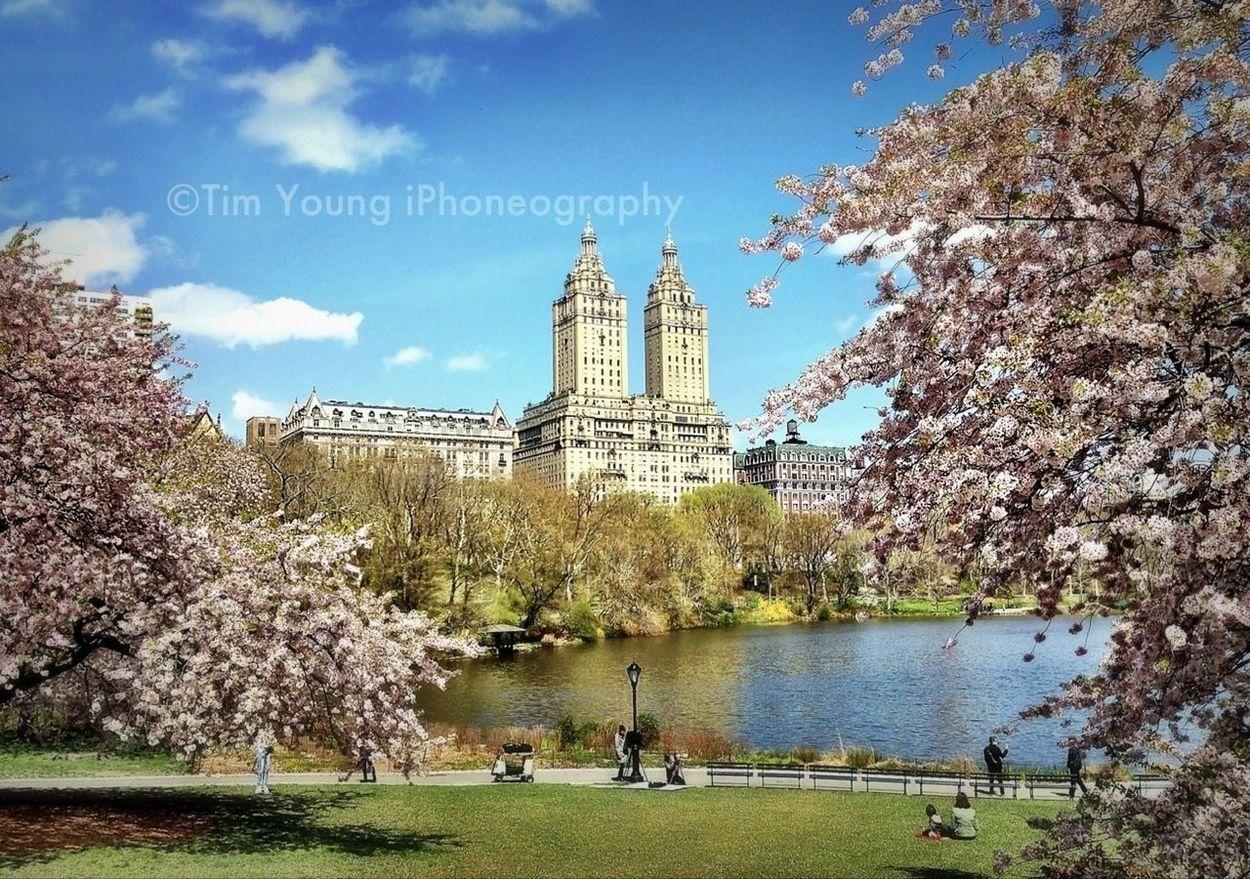 Spring In Manhattan