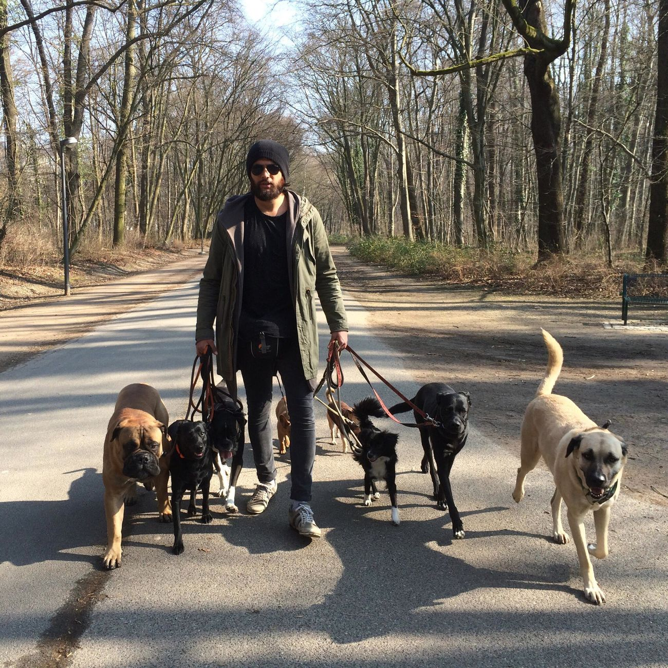 Snap a Stranger Dog Pets Domestic Animals Pet Leash One Person Pet Owner Real People A Stranger Walk Walking Around Dog Walker On My Way To Work Enjoy The New Normal Adapted To The City in Stadtwald  Köln Germany