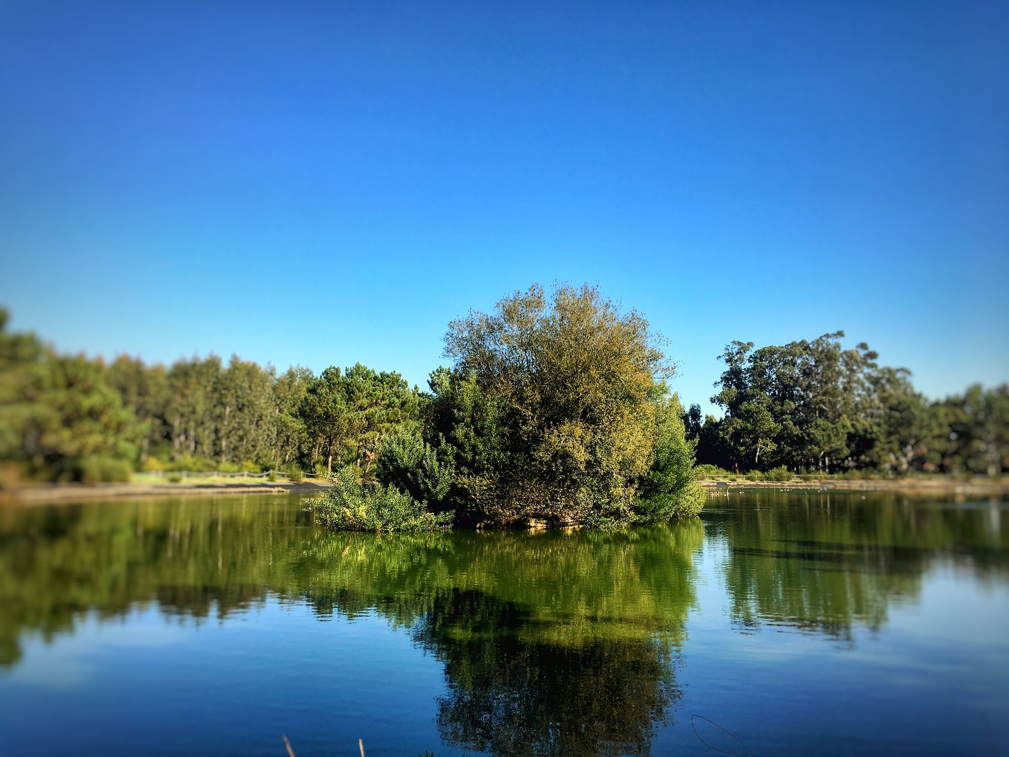 reflection, water, tree, nature, clear sky, blue, waterfront, no people, growth, beauty in nature, outdoors, scenics, lake, day, sky