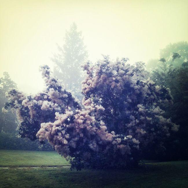 out of the fog. Foggy Morning Walking Walking Around Melancholic Landscapes