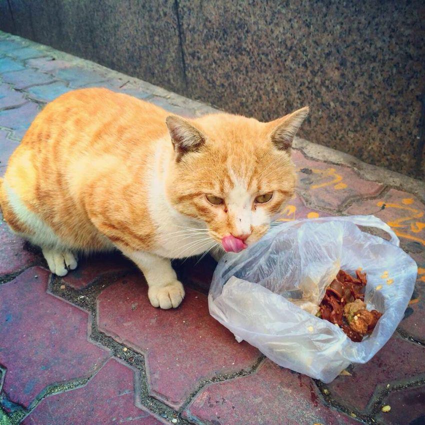 Cat and food:) Cat♡ Animals RoadsideView Dalian