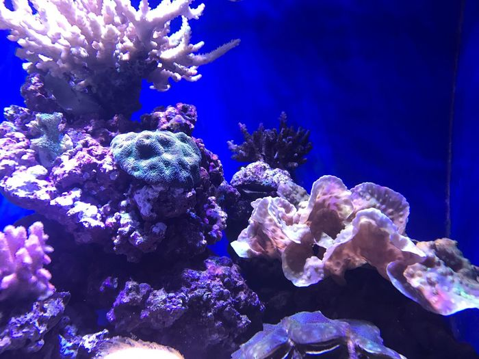 Underwater Sea Life Coral Water UnderSea Sea Nature Beauty In Nature Animal Themes Animals In The Wild Swimming What Who Where Enjoy The New Normal