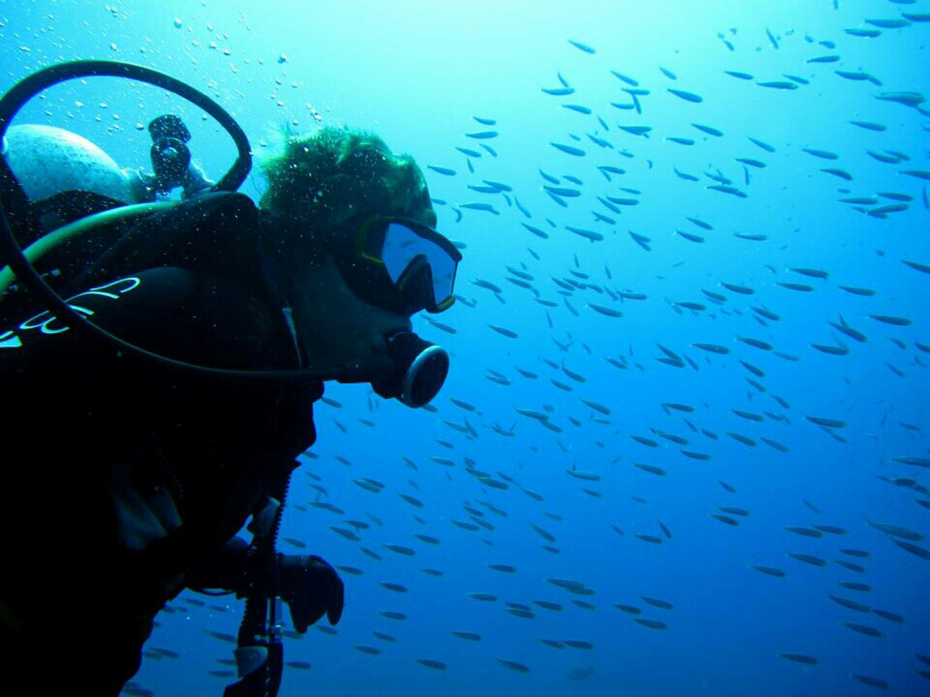 Hanging Out SCUBA Diving Scuba Diving